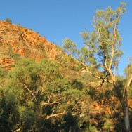 The Aboriginal name for Ellery Creek Big Hole is Udepata, and the permanent water made it a special meeting place for the Arrernte people on the fish and honey ant dreaming trails.